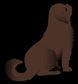 dog11-custom