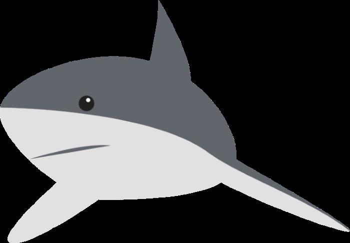 shark15-custom