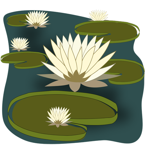 water-lily2-custom