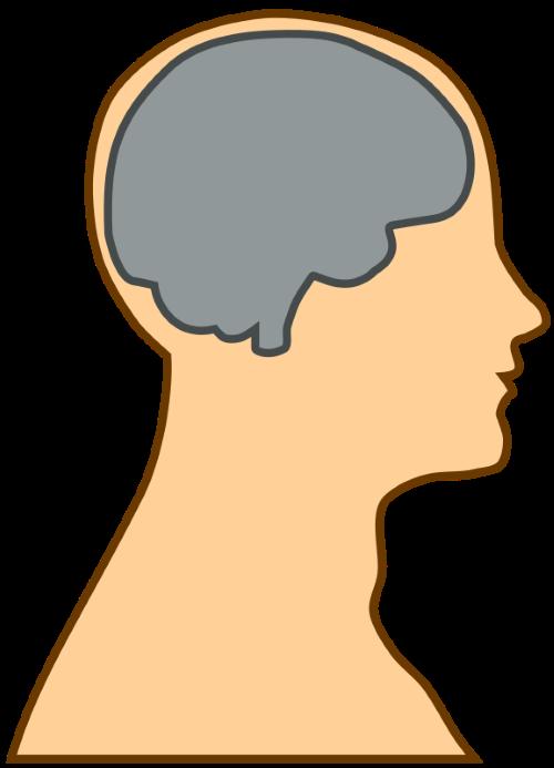 brain7openclipart.org (Custom)