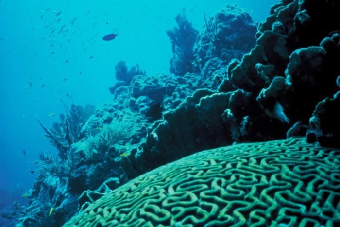 Coral_ReefUSFishand Wildlife ServicePublic Domain (Custom)