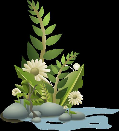 plant5Pixabaydotcom (Custom)