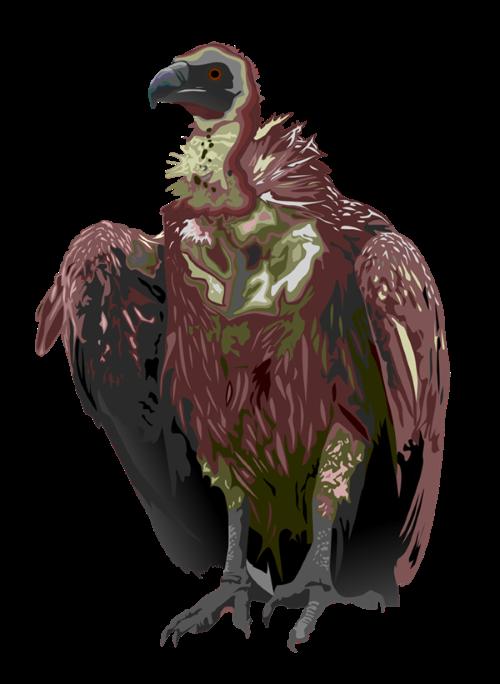 vulture3 (Custom)